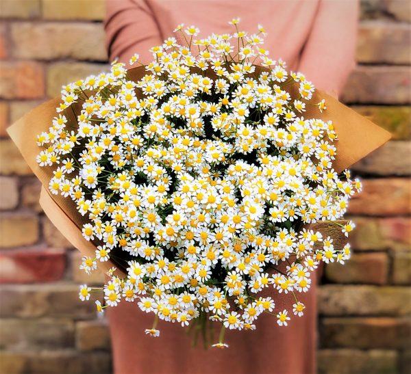 flower bouquet of chomomilei